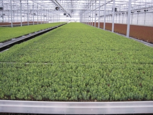 Movable table full of seedlings